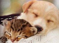 kitten puppy